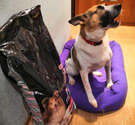 Сотрудники и гости Уральского центра народного искусства собрали более 4000 рублей на необходимый корм для собаки Миры